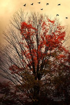 ✯ Autumn Goodbyes
