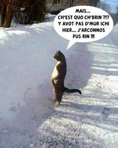 Pauvre chat qui ne se retrouve plus, est une image drôle publiée le 10 Février 2018 par andy.buck. C'est la nature, non ?