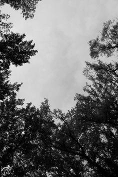 Les arbres, sans encre de couleur pendant l'impression.