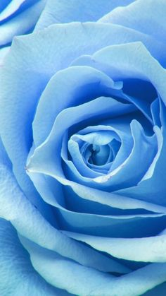 65 ideas for wallpaper blue roses Light Blue Roses, Blue Flowers, Blue Roses Wallpaper, Iphone Light, Light Blue Aesthetic, Everything Is Blue, Blue Wallpapers, Flower Backgrounds, Paper Roses
