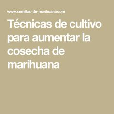 Técnicas de cultivo para aumentar la cosecha de marihuana