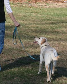When a dog pulls excessively on leash, it is unpleasant for both the dog and the person walking him. Many people resort to yanking on their dogs, using pinch or choke collars, or stopping every few feet hoping for something to change. By following these humane tips, your walks will improve with your dog and you will both enjoy walking together.