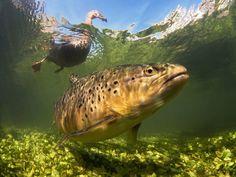Foto subacquee bellissime - Il Post