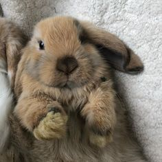 Bunny rabbit, cute baby animals, happy animals, animals and pets, funny . Cute Little Animals, Cute Funny Animals, Cute Dogs, Cute Baby Bunnies, Cute Babies, Lop Bunnies, Happy Animals, Animals And Pets, Cute Animal Pictures