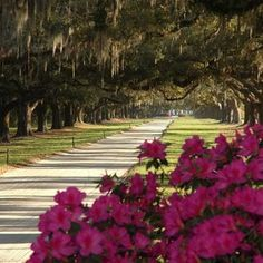 Boone Hall Plantation | 10 Best Charleston Plantations via @USATODAY @10Best | History Lives: Visit Charleston's Antebellum Plantations to Picnic, Explore and Learn http://www.10best.com/destinations/south-carolina/charleston/attractions/plantations/