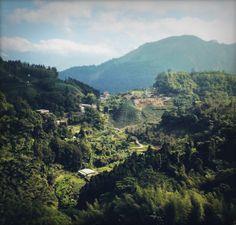 ruili teeanbaugebiet http://www.soiblossom.com/soiblossom-blog/taiwan-special/