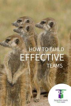 Great #teams achieve great things. On the #blog, we give some useful #tips based on our experience as a team: https://blog.teachlr.com/how-to-build-effective-teams/
