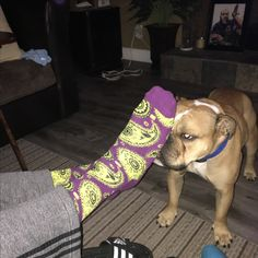 Django loves feet. These fancy socks happen to have Uncle Jab's feet in them.