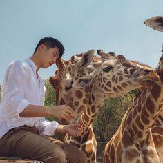 ▷ @xxdaniel - XXDanieL Pro Photographer - 攝影師被長頸鹿🦒踢。成就達成! #XXDANIEL #photography #photographer Heaven On Earth, Vulnerability, More Photos, Giraffe, Safari, Travel Photography, Animals, Instagram, Bts