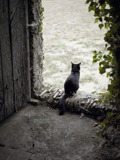 Black kitty overseeing the French countryside at Chateau de l'Epinay in Saint-Georges-sur-Loire, France. More cats of France at http://www.traveling-cats.com/search/label/France