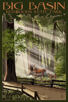Big Basin Redwoods State Park  Deer and by NightingaleArtwork