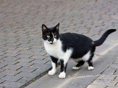 """""""Felix"""" ist der beliebteste Katzenname in Deutschland für die Kater der Zunft    www.einfachtierisch.de"""