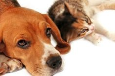 Keeping Your Home Pet Safe – Top Tips | Holistic Pet Care - For PAWSitively Healthy Pets!