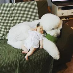 This Little Girl and Her Giant Poodle are Everyone's Giant Poodle, Poodles, Bassinet, Little Girls, Pets, Crib, Toddler Girls, Baby Girls, Cots
