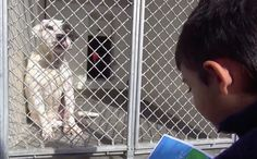 Pirate The Pit Bull's Favorite Part Of The Week Is When This Autistic Boy Reads To Him