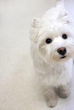 Such a precious little face!.