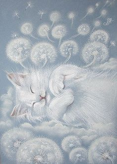 Dreams and Cats Wishes..