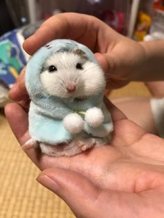 Hamster wearing a hoodie. Hamster wearing a hoodle , Cute Little Animals, Cute Funny Animals, Funny Hamsters, Robo Dwarf Hamsters, Chinchillas, Tier Fotos, Funny Animal Memes, Cute Animal Pictures, Animal Pics