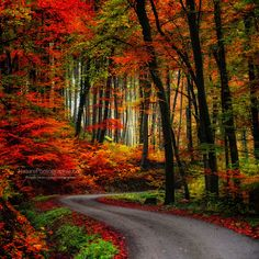Photographer: Philippe Sainte-Laudy   One of my passions is to photograph winding wood's roads in the autumn. I have found THIS to be one of the most perfect pictures of my goal to get the perfect shot.