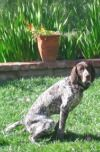 Post image for Potty Training An Adult Dog – Avoiding 2 Common Mistakes