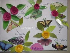 ABC and Teaching About Life Cycles of Frogs, Butterflies, Plants, and Science Projects, School Projects, Projects For Kids, Butterfly Plants, Blue Butterfly, Butterflies, Lifecycle Of A Frog, Butterfly Life Cycle, Christian Kids