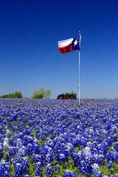 Love the Texas flag!!!