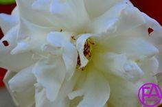 Makro-Blüte | FeenArt | Claudia Böttcher | DSC_6075FVFAFGk