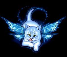 30 Luchshih Izobrazhenij Doski Butterfly Cat Milye Kotiki Koshki Zhivotnye