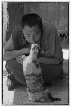 15 best Chats du Tibet images on Pinterest | Tibet, Cat and Photo ...