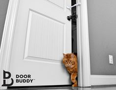 The door strap that makes you & your cats life better! TheDoorBuddy.com #TheDoorBuddy