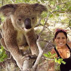 Koalas on Magnetic Island | Backpacking 101: Brisbane to Cairns road trip
