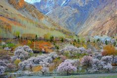 Hunza  valley is located in the region of Gilgit-Baltistan. .