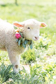 Shepard's Farm Wedding Inspiration Adorable spring lamb with a floral garden Cabras Animal, Mundo Animal, Cute Baby Animals, Animals And Pets, Spring Lambs, Sheep Art, Cute Sheep, Baby Sheep, Baby Lamb