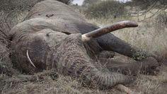 Olifant is dood