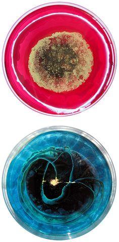 每日盤:培養皿藝術由Klari李嘉欣|靈感電網|設計靈感