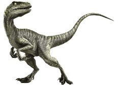 Velociraptor - Park Pedia - Jurassic Park, Dinosaurs, Stephen Spielberg