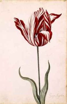 February 3, 1637: Tulip Mania ends. When the tulip was introduced to Europe in the 17th century, the Dutch went mad for them. Speculation in tulip futures reached an all-time high in the winter of 1636-1637, when a single tulip bulb might be worth as much as a house. And then one day -- February 3, 1637 to be exact -- they held an auction and nobody came. The Tulip Bubble had burst.