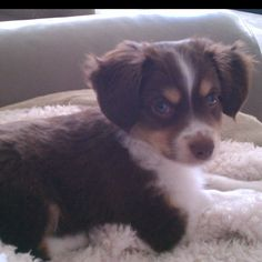 I know that Penny will be WAY cuter than this pup!