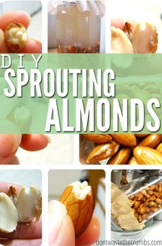 DIY Sprouting Almonds Give your food life! This simple tutorial teaches you how to sprout almonds and give a little boost of nutrition in your diet! Raw Food Recipes, New Recipes, Healthy Recipes, Healthy Options, Drink Recipes, Cooking Tips, Cooking Recipes, Freezer Recipes, Vegetarian Cooking
