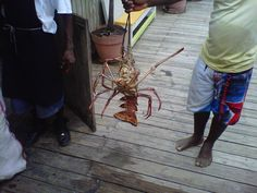 Fresh caught lobster! Just in time for Lobster Fest