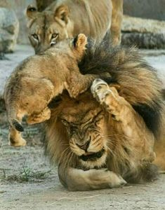 """I'm telling you, sometimes these kids get on my nerves bigtime""! #BigCatFamily"