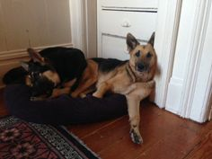 Daisy and Izzy (formerly Rumi) enjoy hanging out together.  April 04, 2014