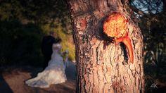 Matrimonio in 4k UHD Wedding