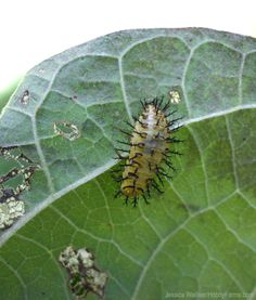 Help keep pests out of your garden with spinosad, an organic pesticide. Photo by Jessica Walliser (HobbyFarms.com)