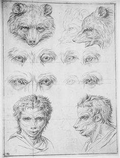 Huit yeux d'ours, trois têtes d'ours et deux têtes d'hommes leur ressemblant (Charles Le Brun; Album Le Brun Charles -3- Folio 41; 1690)