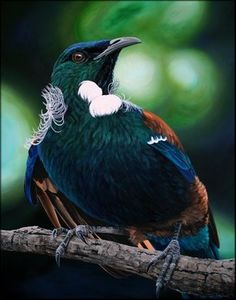 Many plants and animals are unique to New Zealand. This topic covers a range of resources on various habitats, conservation issues, endangered species, rongoā (medicinal use) and agencies like DOC that help protect our environment. Tui Bird, Maori Designs, Nz Art, Maori Art, Kiwiana, Bird Artwork, Sea Birds, Exotic Birds, Flora And Fauna