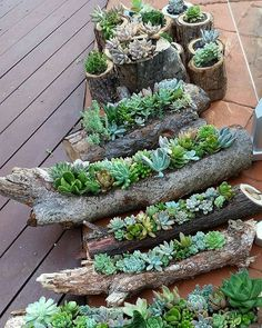 from albicker on Pinterest: Succulent gardens in hollowed out logs and also in timber rounds available from the Succulent Guy at the Byron Bay Beachside Market - Easter Saturday 26th March. by thesucculentguy - Source: - Suculentas Colombia - suculentasCol - www.suculentascolombia.com Tag a friend below⤵