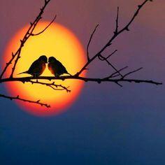 Beautiful Nature Wallpaper, Beautiful Sunset, Beautiful Birds, Beautiful Landscapes, Beautiful Pictures, Watercolor Sunset, Aesthetic Pastel Wallpaper, Silhouette Art, Sunset Photography
