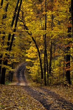 Autumn road (Hidden Lake Gardens, west of Tecumseh, Michigan) by Julie Falk cr. Flor Magnolia, Lake Garden, Autumn Scenery, Back Road, Fall Pictures, Take Me Home, Pathways, Belle Photo, Land Scape