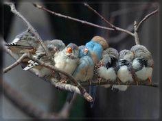 Chicks #birds #chicks